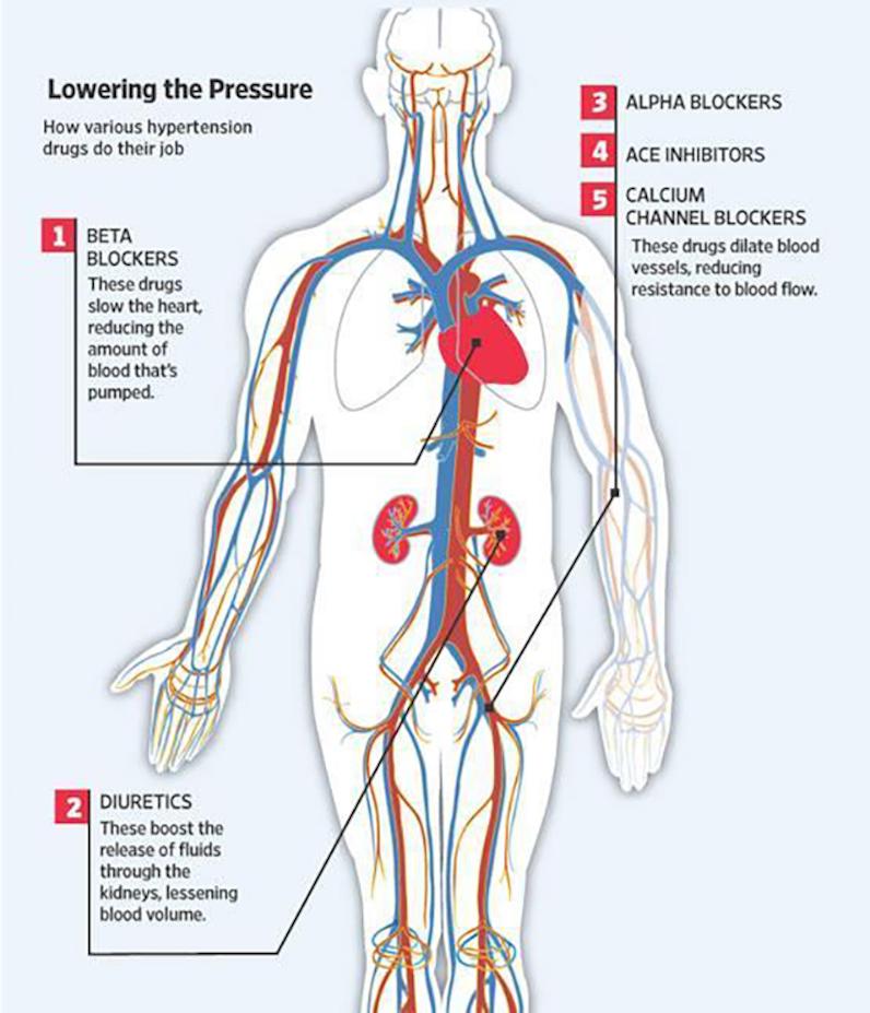 Lowering High Blood Pressure, Casana